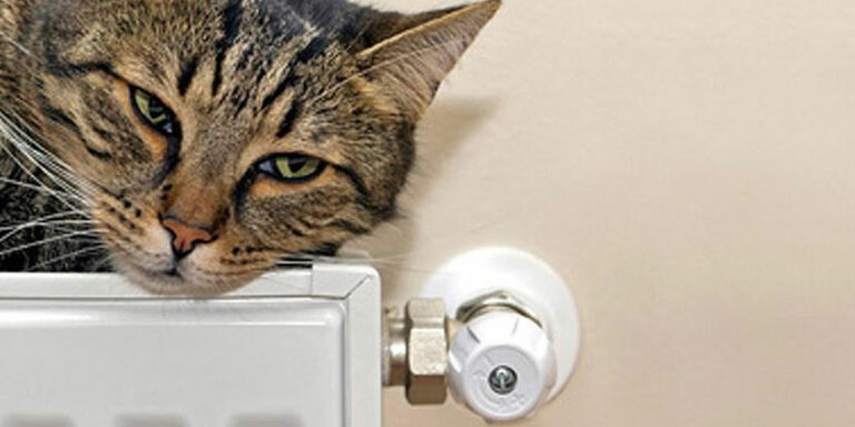 confort chez soi pour tous les habitants, même le chat